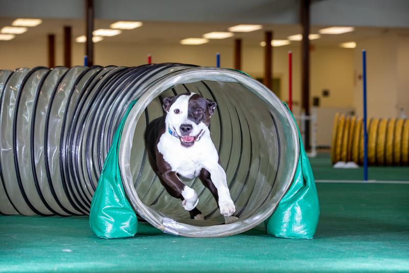 SPCA_Agility-75.jpg