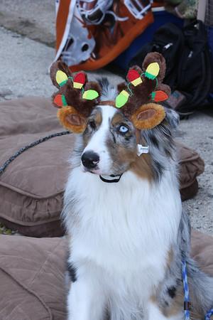 Pflugerville Animal Center Santa