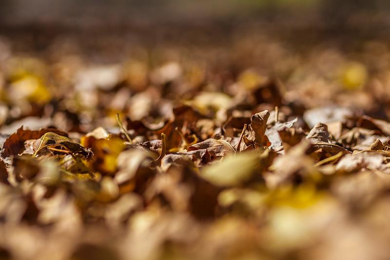 Leaves_2013-3114.jpg