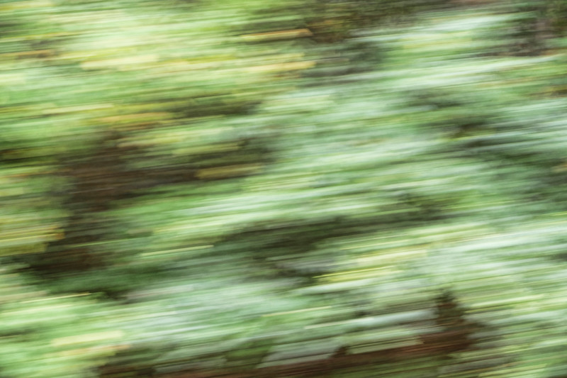 2015-10-23 abstract trees moving P1000040.jpg