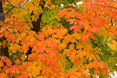 2008-10 NH & VT Foliage