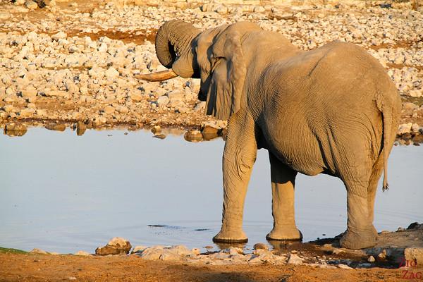 elephant at waterhole in Etosha National Park, Namibia 2