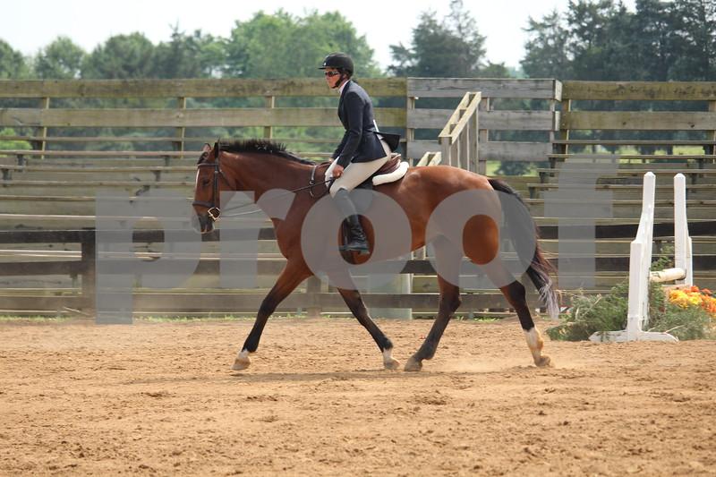 PLEASURE HORSE
