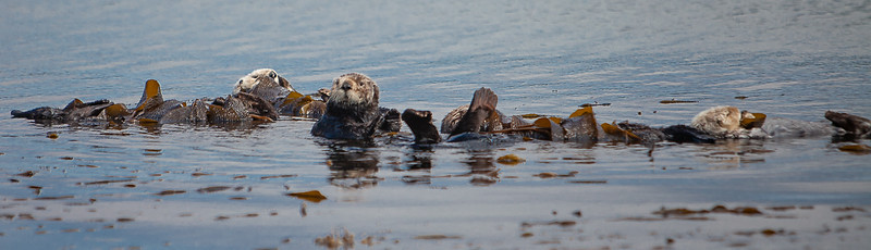 Morrow Bay Otters and AG Roosters-23.jpg
