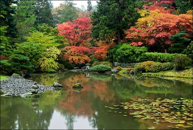 Japanese Garden 2011