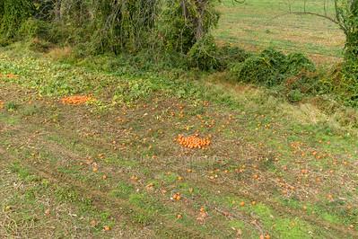 10/13/18 Pumpkins