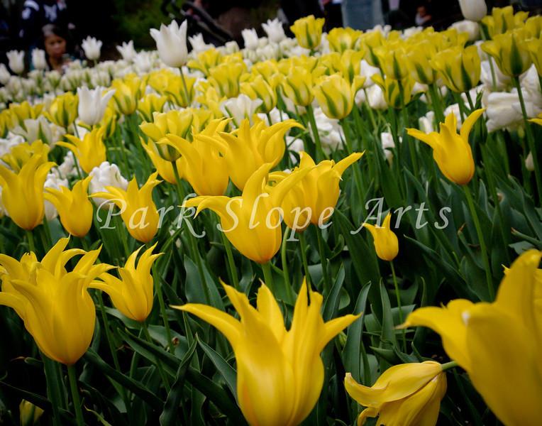 FlowersR-00080.jpg