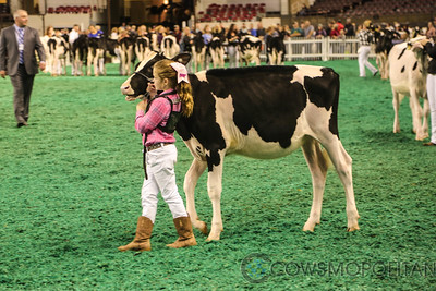 Mid-East Fall National Holstein Show 2017 - Heifers