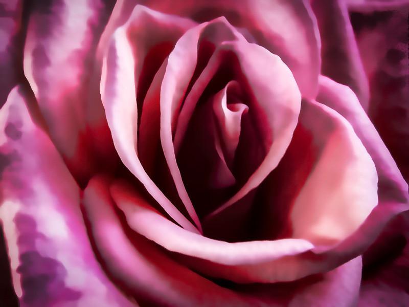 August 1 - Rose.jpg
