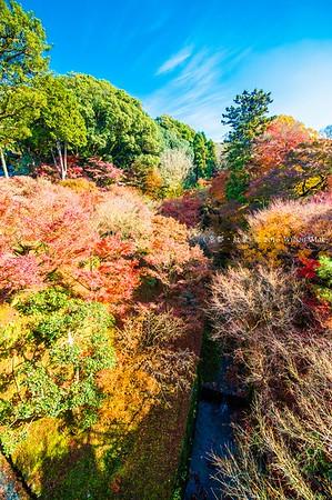 Kyoto(京都) - Dec 2016