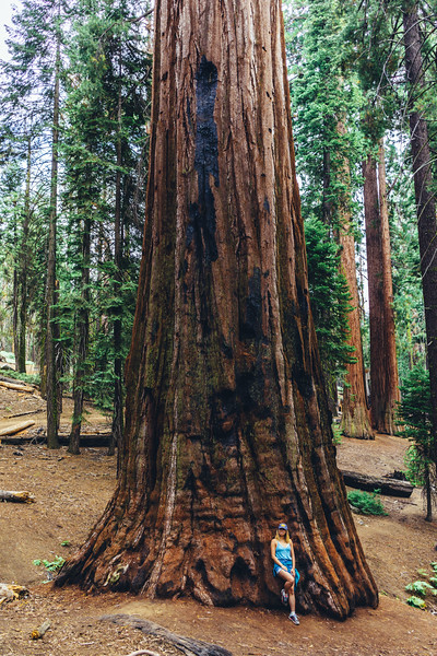 Rui in Sequoia-06946.jpg