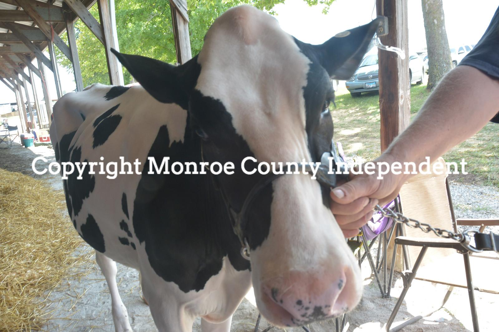 Monroe County Fair - Livestock 2018