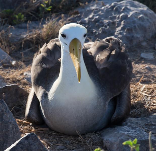 Galapagos_MG_4534.jpg