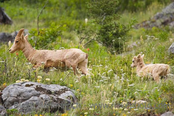Wildlife North America