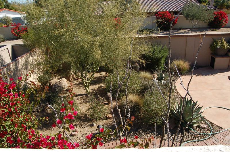 20121221_Scottsdale_Back_Yard_048.JPG