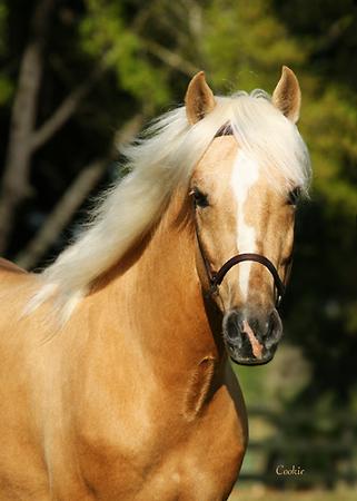 Horse Proofs, Stallion shoots