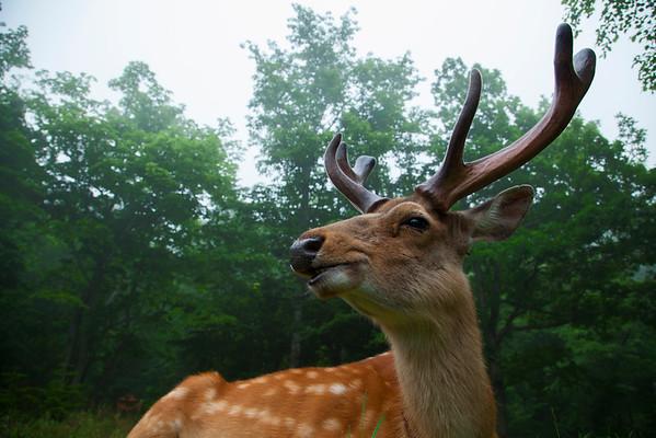 The Wabi Sabi of Japanese Wildlife