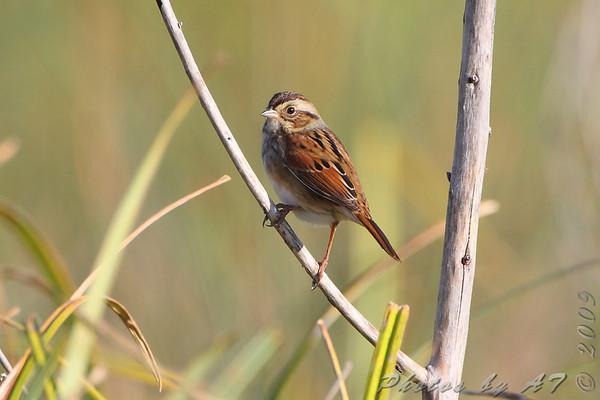 2009-10-11 Riverlands Migratory Bird Sanctuary