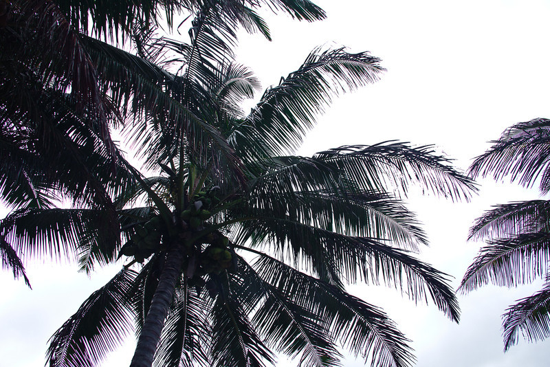 Halawa Valley palm trees.jpg