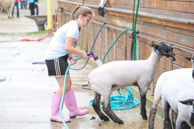 Sheep Show-20.jpg