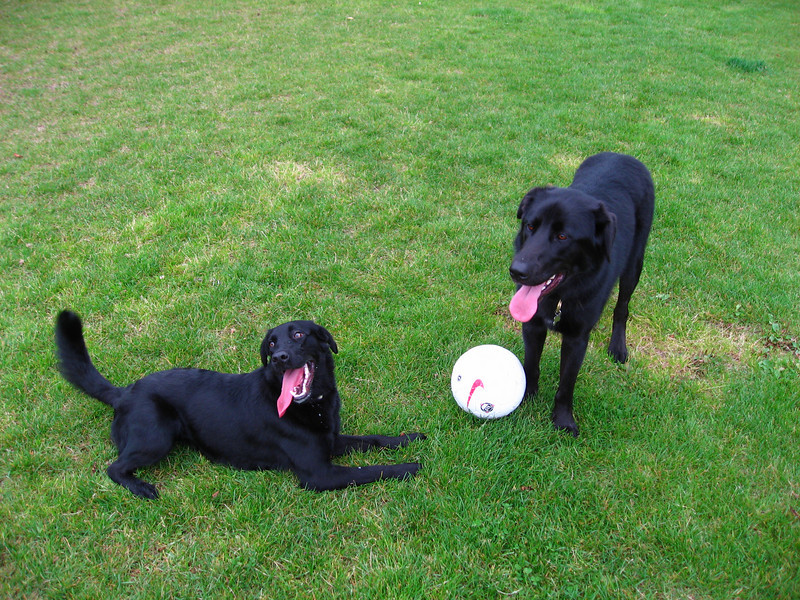 Lola and Coho
