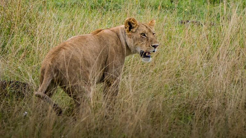 Attack of the Buffalos-0112.jpg
