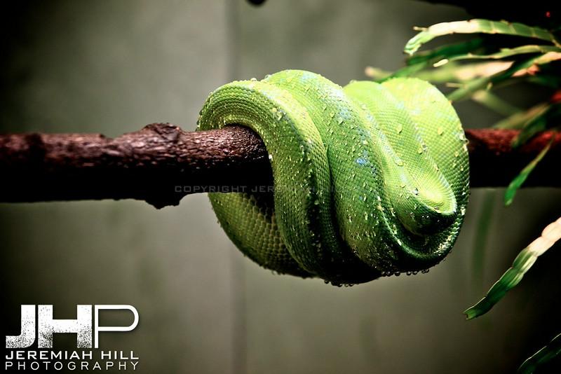 """Curled Snake #1"", Toronto Zoo, 2013 Print JP13-99-150"