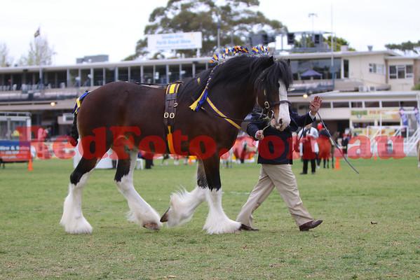 2009 09 28 Perth Royal Show  Shire