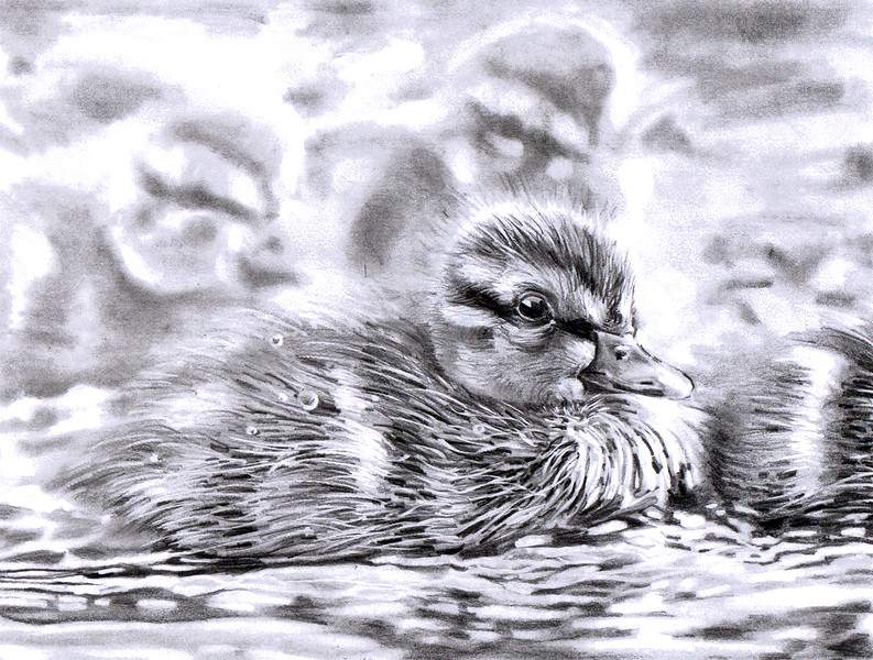 sm little darlin duckling.jpg