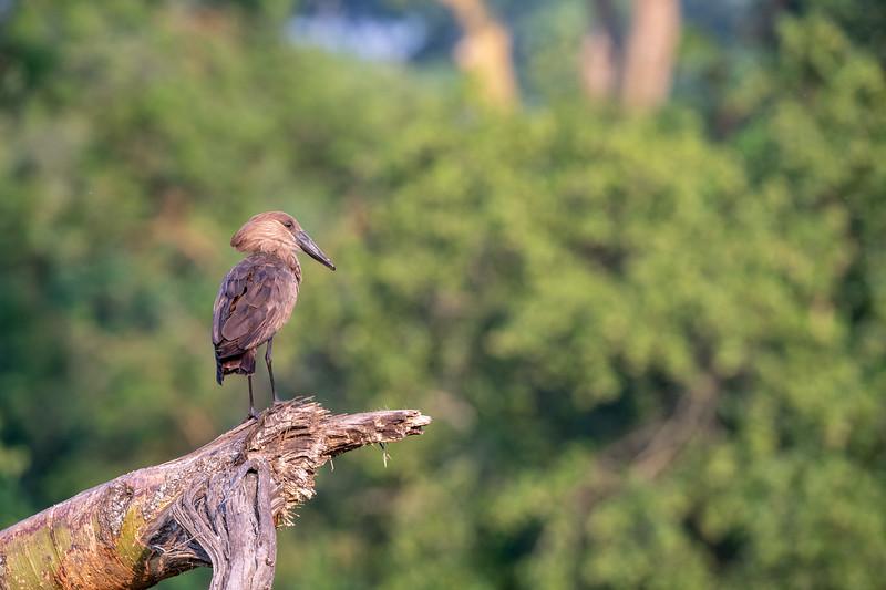 Uganda_T_QE-229.jpg