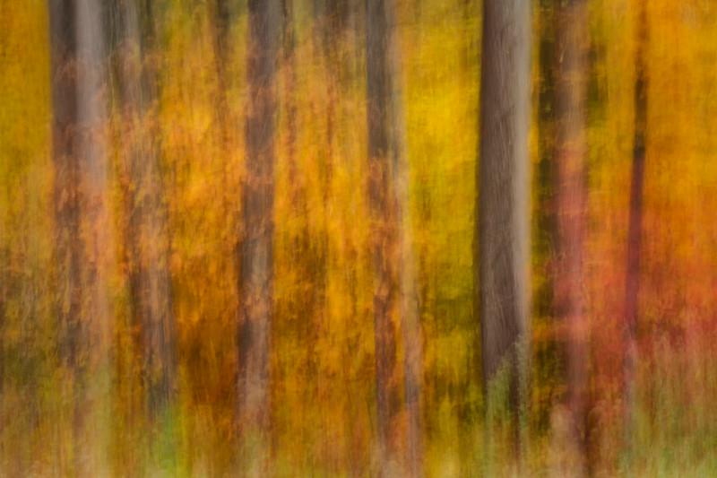 Autumn Near Scherman Hoffman Wildlife Sanctuary