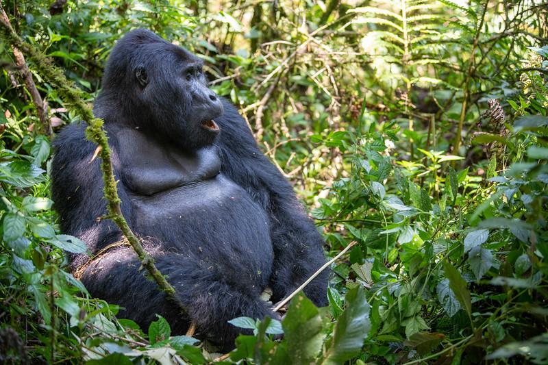 Uganda_T_Gor-345.jpg