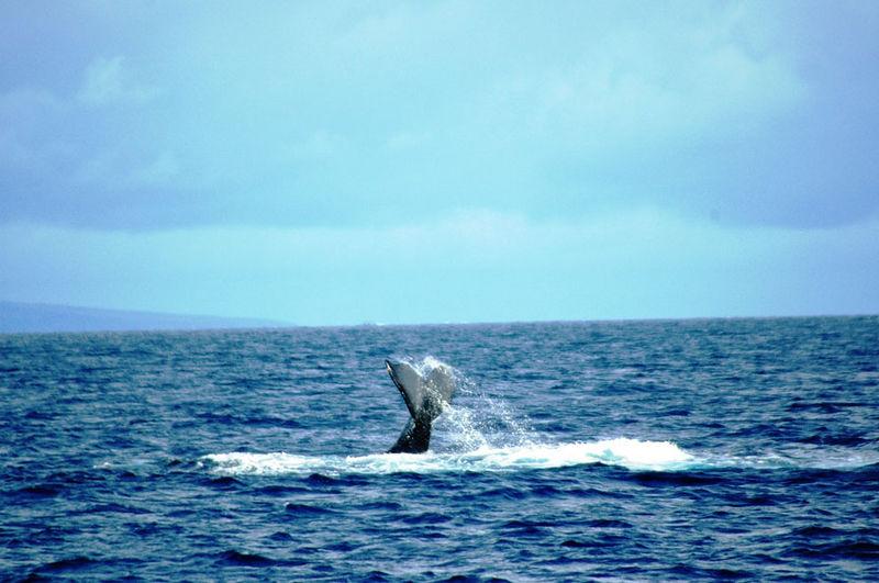 whaleslap3.jpg
