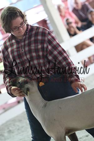 Ringshots - Market Lamb