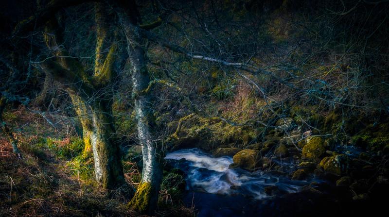 Forest Shadows-104.jpg