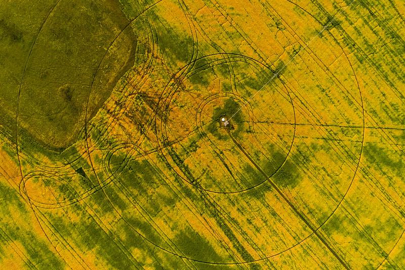 barley 41.jpg