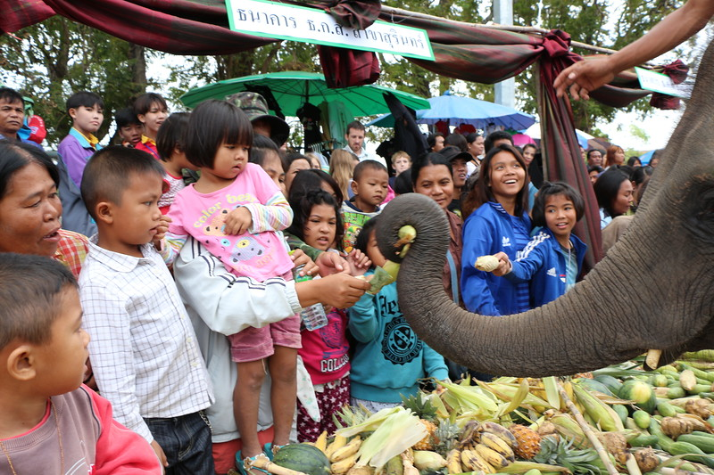 2014-11-14 Surin Elephant Welcome Feast 322.JPG