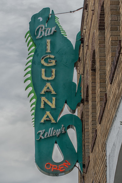 Iguana Kelley's.jpg