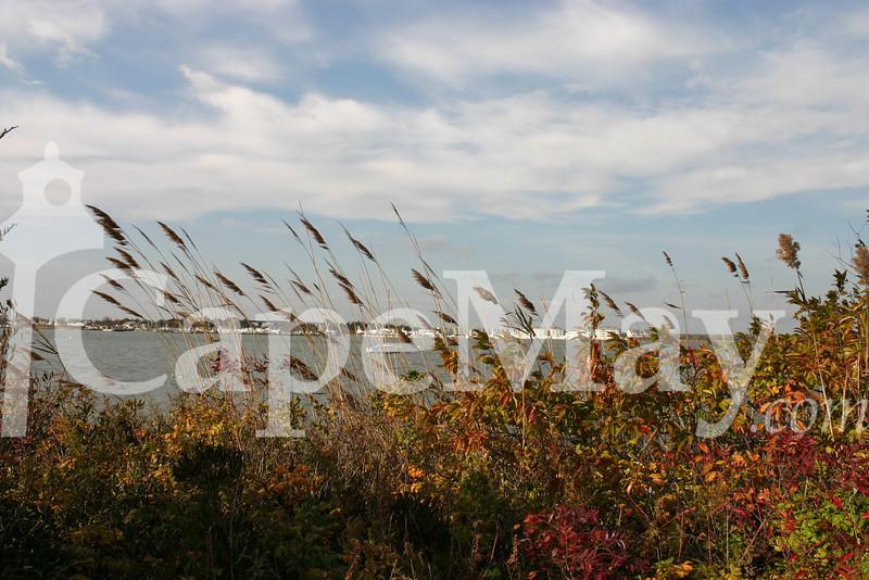 Nov_4_11 023.jpg
