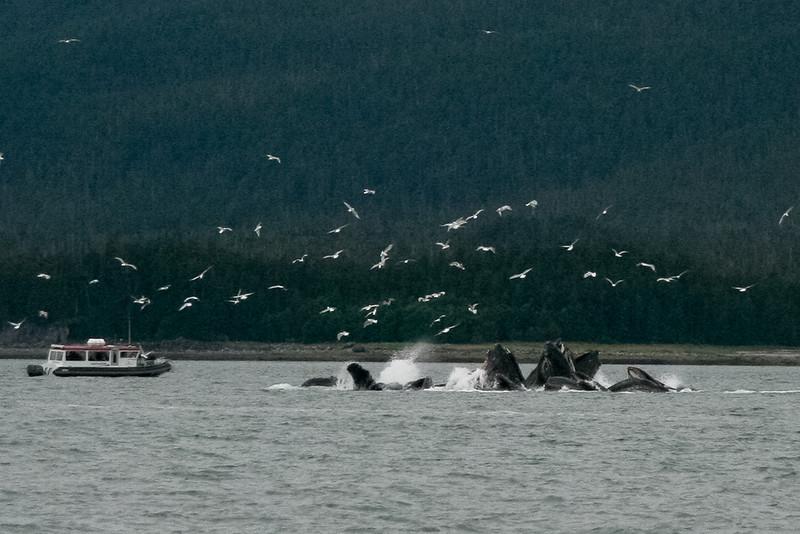 Alaska 2009-337.jpg