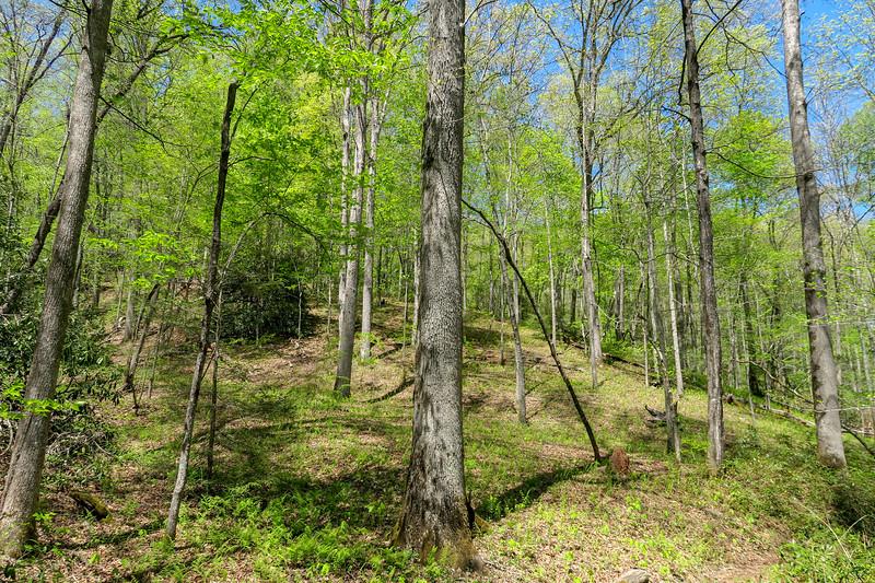Laurel Creek Trail -- 2,620'