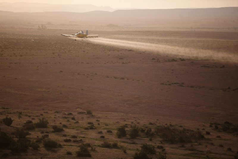 . A light plane sprays pesticides as a Swarm of locusts arrives in Israel near the Egyptian border on March 6, 2013 in Kmehin, Israel. Egypt and Israel have been swarmed with millions of locusts over the past few days causing wide spread disturbances.  (Photo by Uriel Sinai/Getty Images)