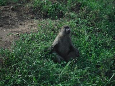 1494239969African-Safari-13.jpg