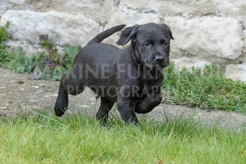 Weika Puppies 24 March 2019-6426.jpg
