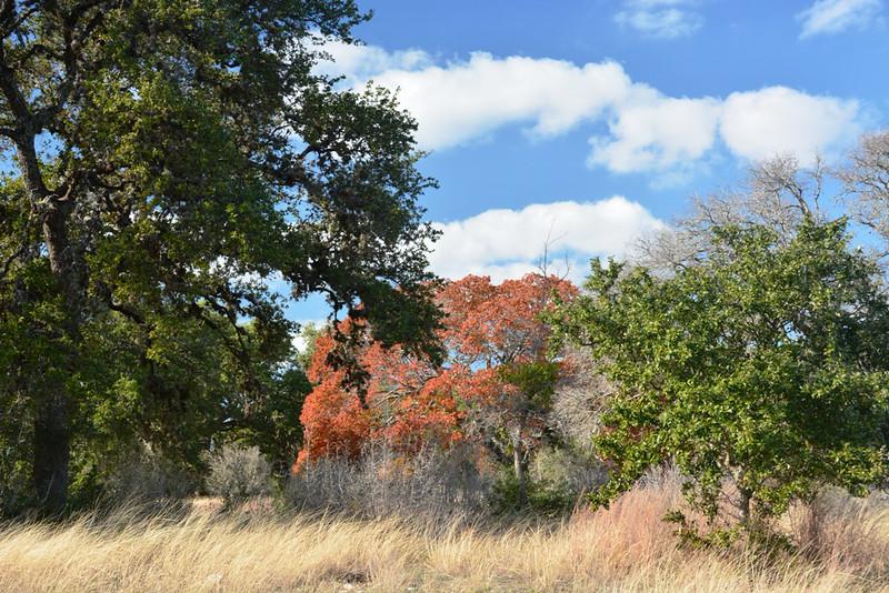 Autumn at the Eads Ranch - 019a.jpg