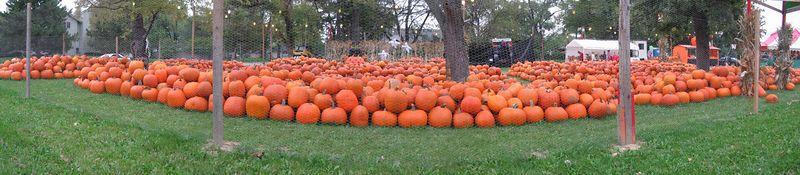 Autumn Great Pumpkin Patch