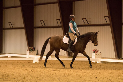 Horse 654