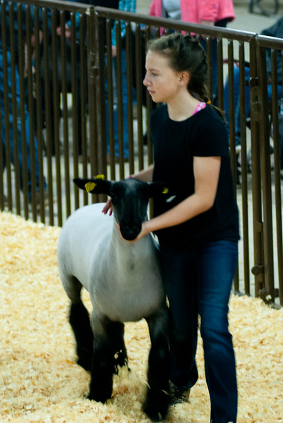 kay_county_showdown_sheep_20191207-69.jpg