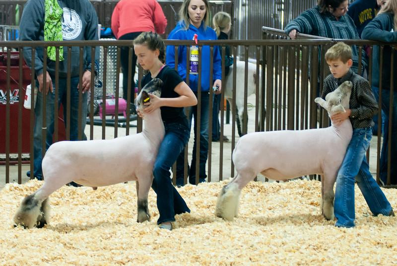 kay_county_showdown_sheep_20191207-55.jpg
