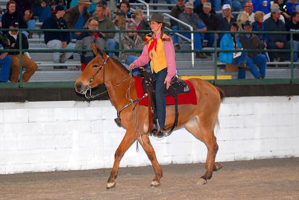 2008 Gaited Mule
